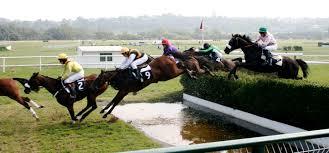Steeplechase (Horse Racing)
