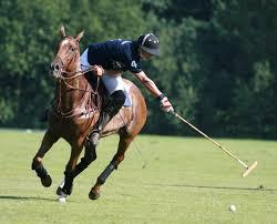 (Horse) Polo